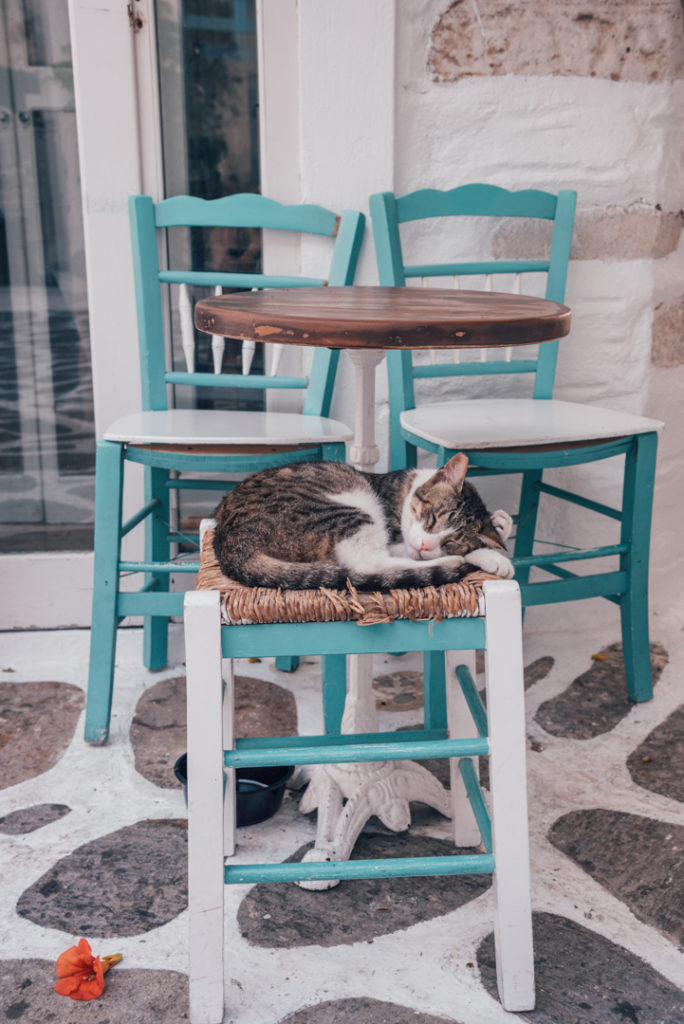 Cat on a chair in Paros, Greece