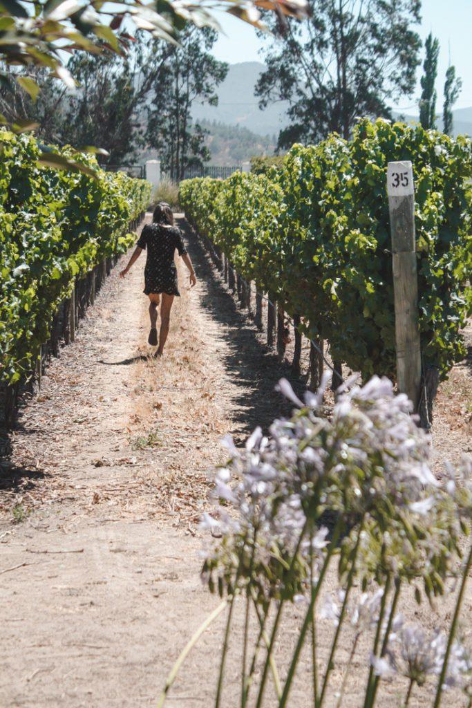 Casablanca vineyards