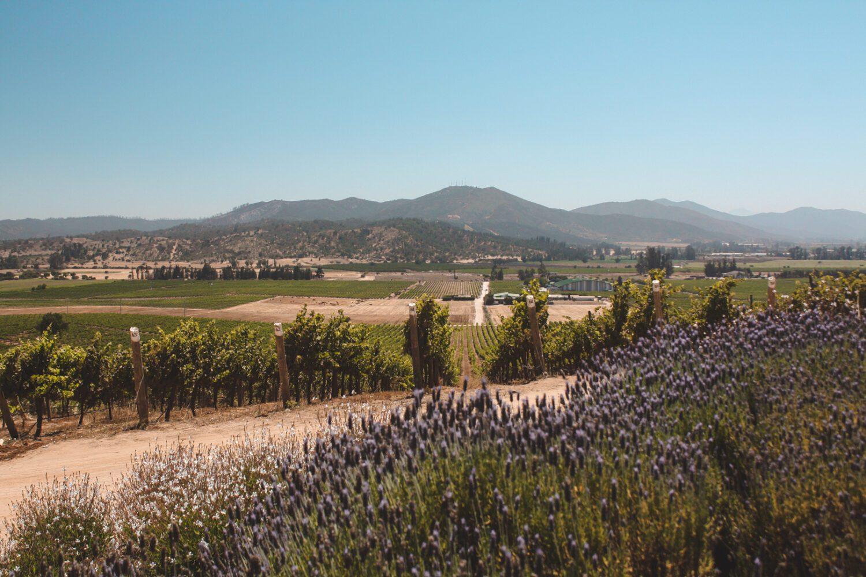 Casablanca Valley wineries- Casas del Bosque