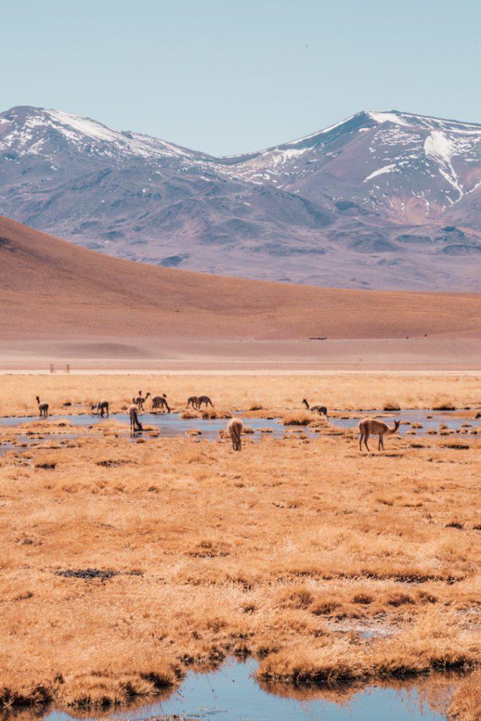 Plains in the Atacama Desert