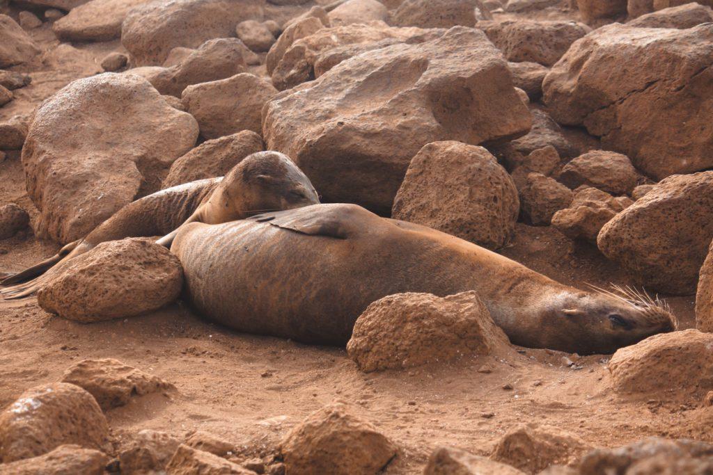 Sealions Galapagos islands ecuador