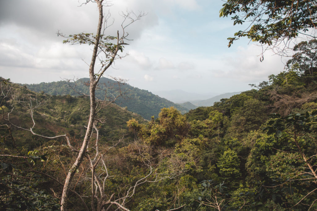 Jungle views over Minca Colombia