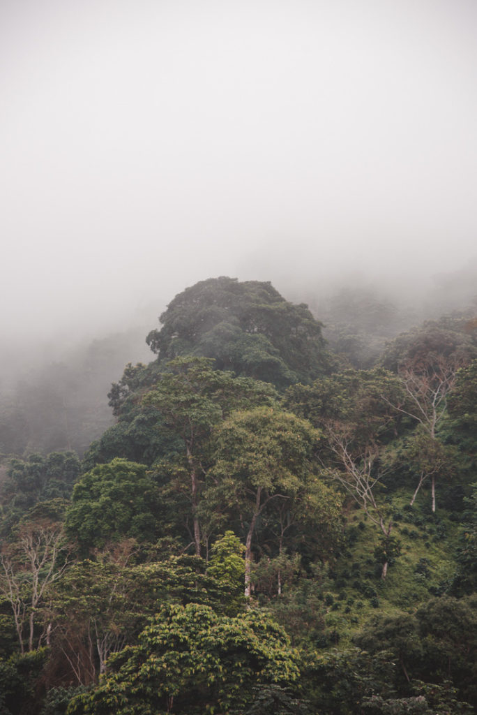 Minca cloud forest