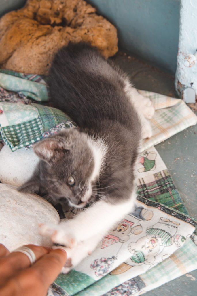 Kitten playing in Greece