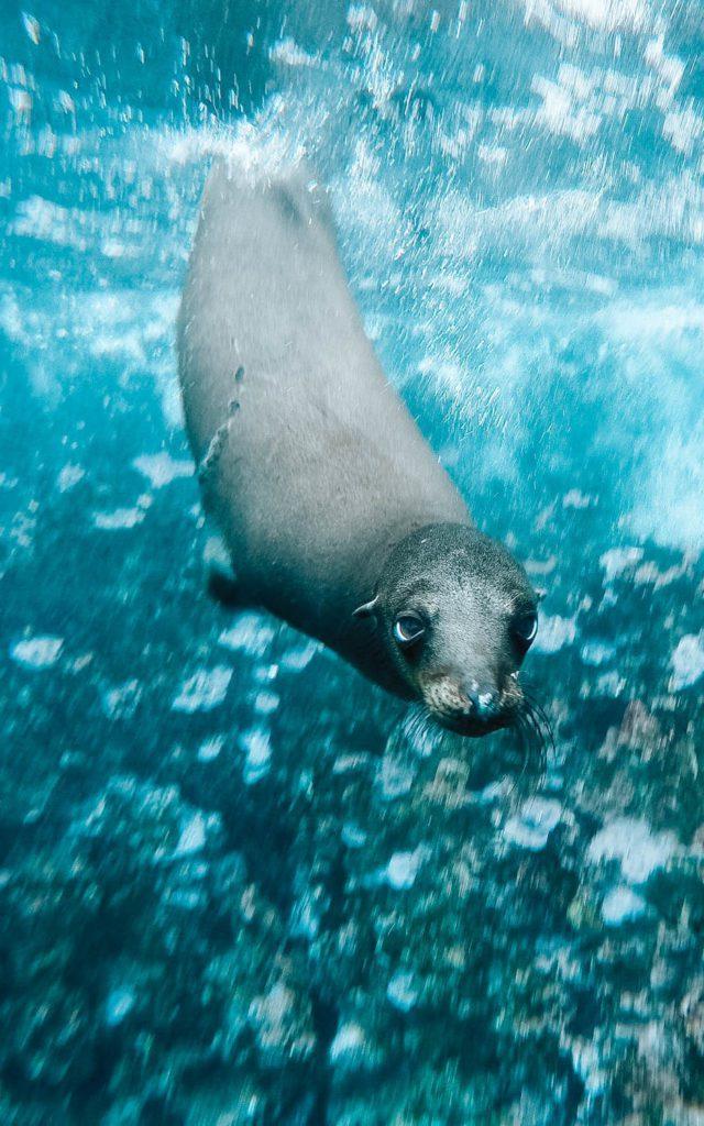 Galapagos island vacations