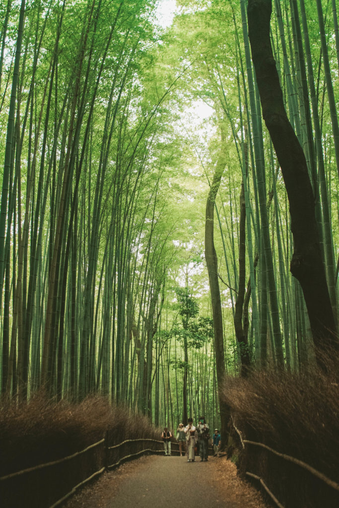 Arashiyama bamboo forest Japan bucket list