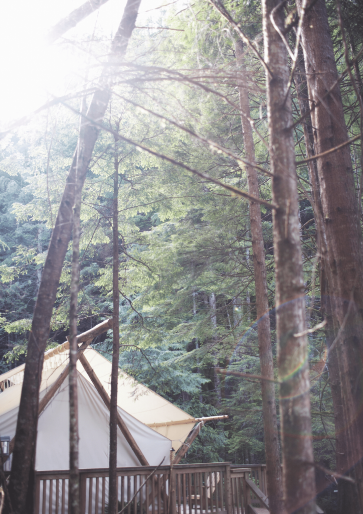 glamping yurt in the forest