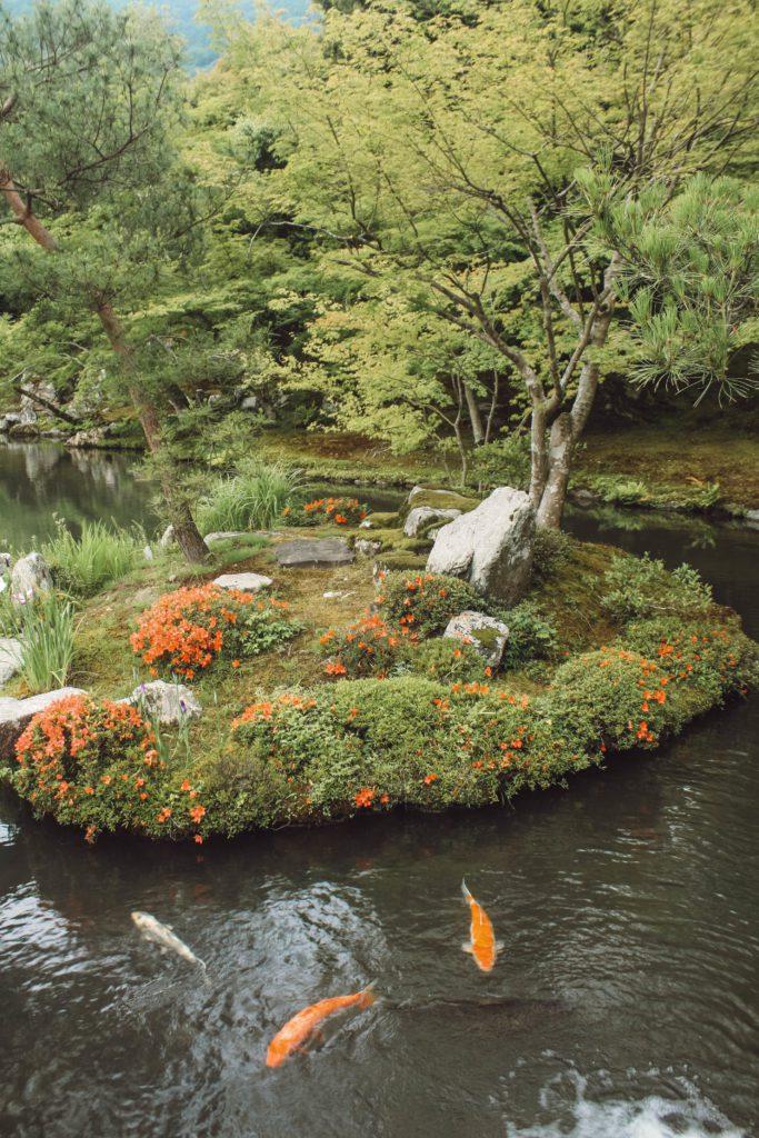 Japanese garden with koi carp