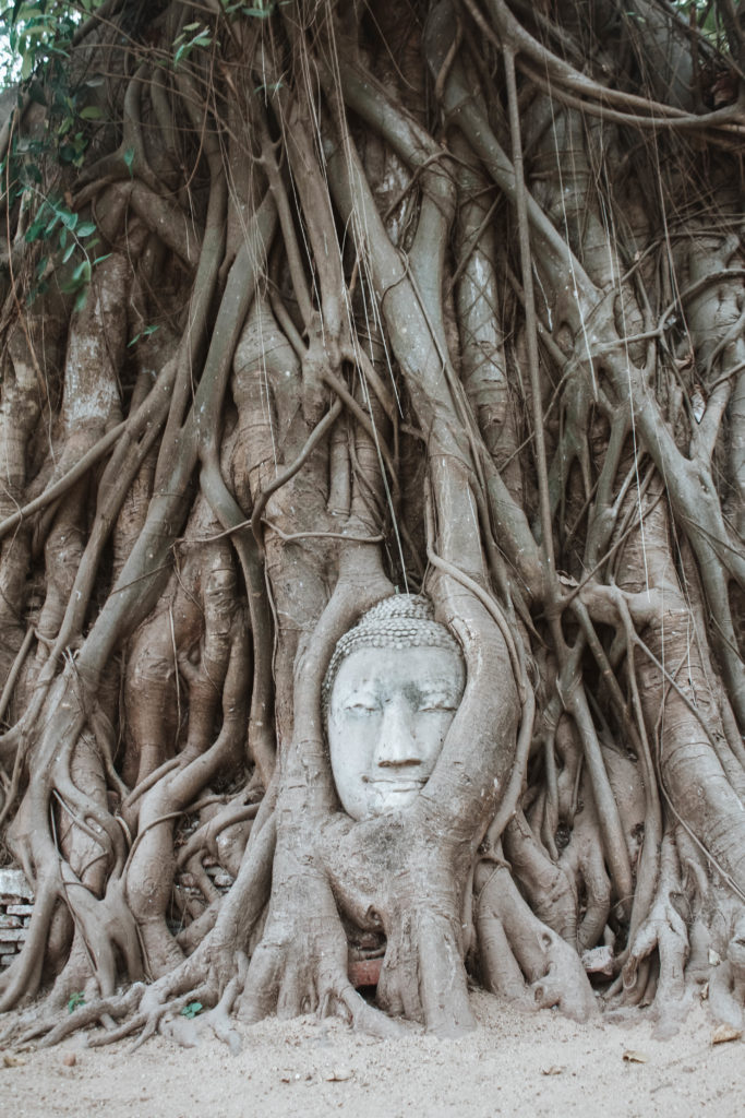 Buddhas head wrapped in tree roots in Ayutthaya