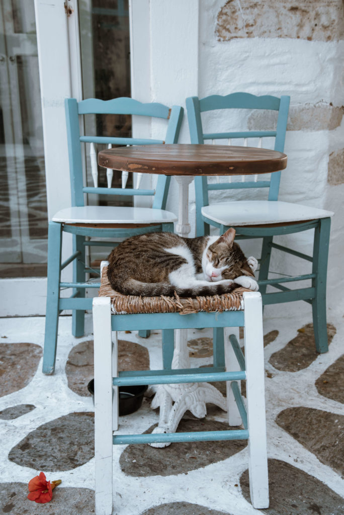 Cat asleep on top of a chair on the Greek islands