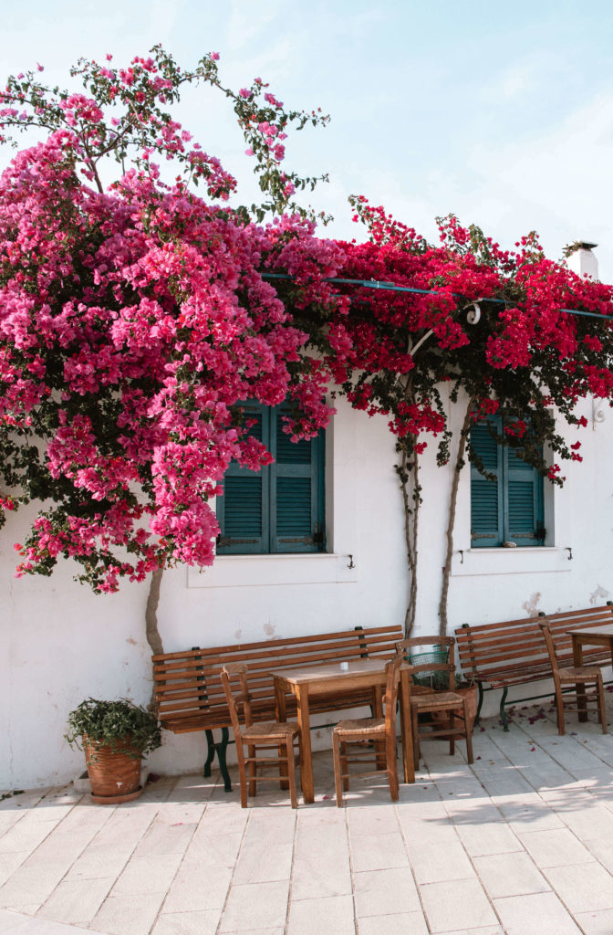 Blooming flowers in Lefkes village, Greece
