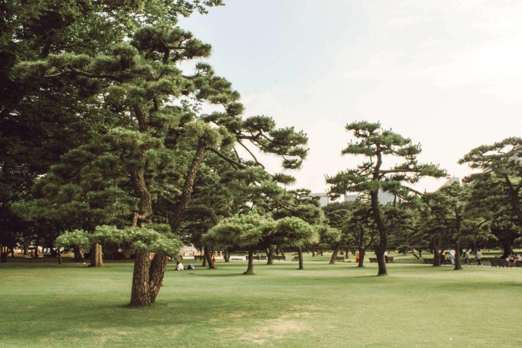 Park in Tokyo Japan