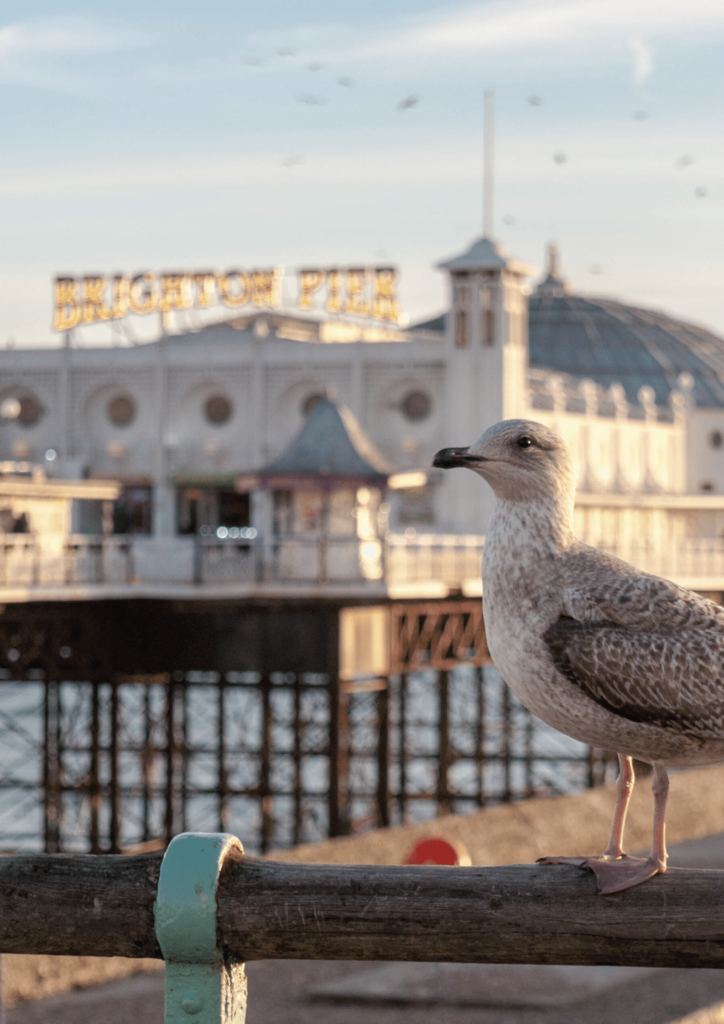 brighton pier with a seagul in the foreground