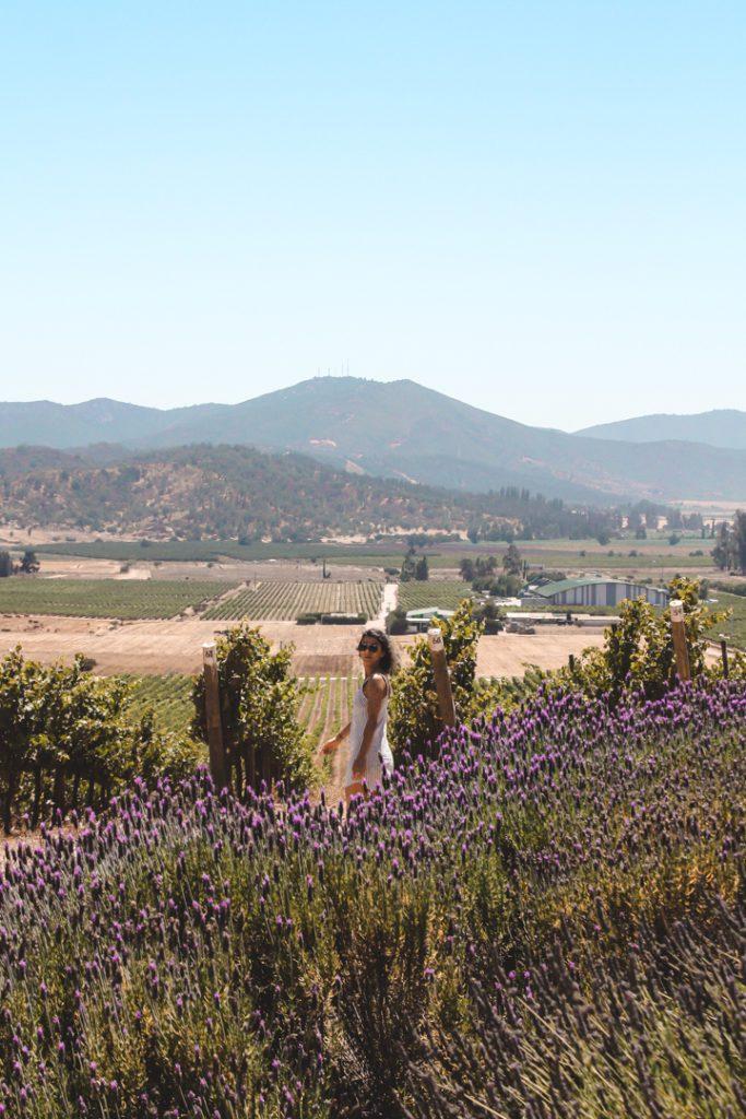 Hilltop vineyard in Casablanca Valley Chile