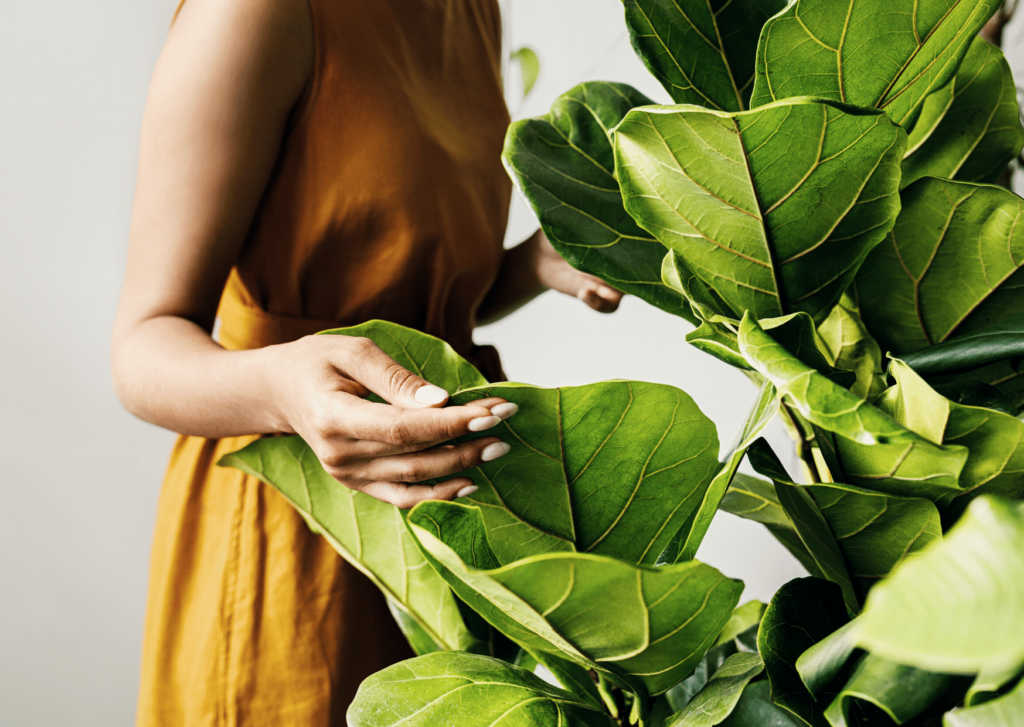 woman touching indoor plant