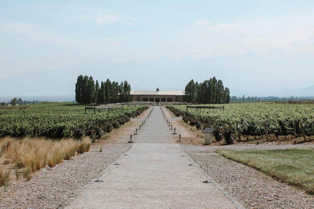 Vineyard in Mendoza best cities to visit in south america