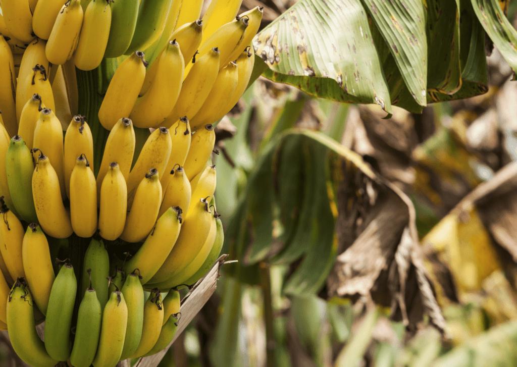 bananas a natural way to boost energy