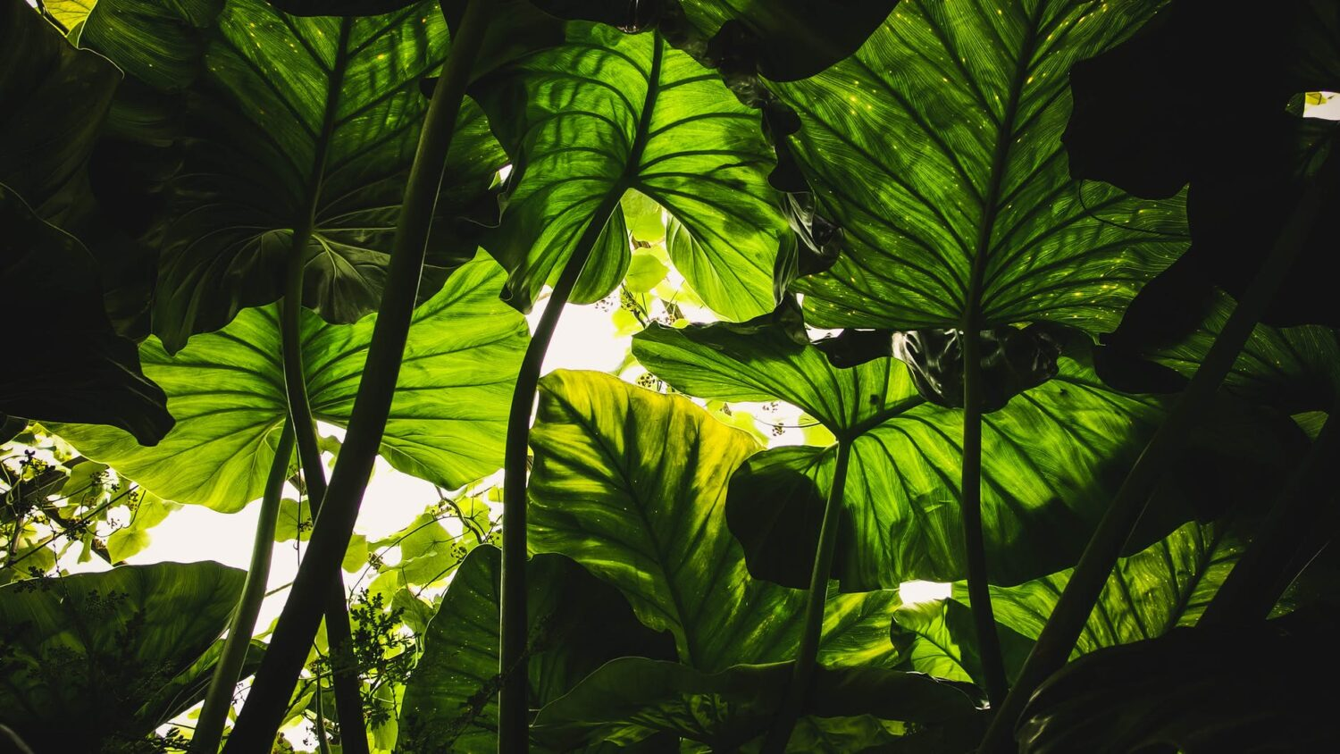 green leafed plants